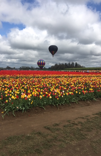 Wheelchair accessible Tulip festival!